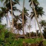 Джунгли, Додандува, Шри-Ланка